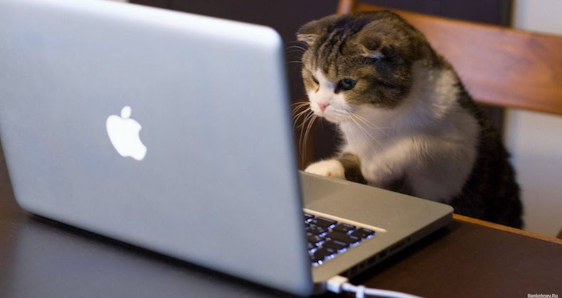 Cat creating joomla content