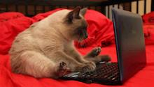 Cat working hard building a Joomla web site